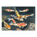A school of Koi fish in a pond Greeting Cards