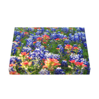 A Sea of Bluebonnets and Indian Paintbrushes Canvas Print