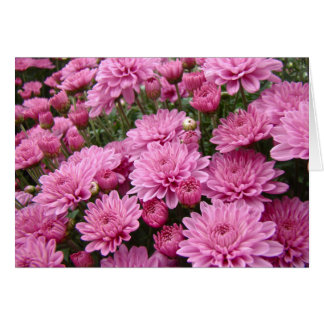 A Sea of Pink Chrysanthemums #2 Greeting Card