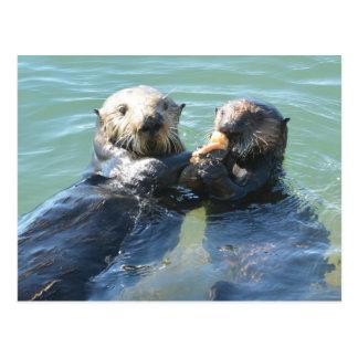 A sea otter mom feeding her pup postcard