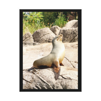 A seal enjoying the sun. stretched canvas print