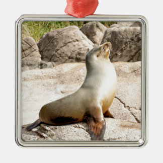 A seal enjoying the sun. Silver-Colored square decoration