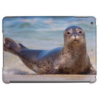 A seal on a beach along the Pacific Coast