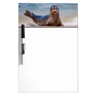 A seal on a beach along the Pacific Coast Dry Erase Board
