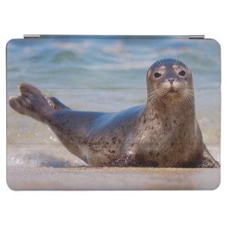 A seal on a beach along the Pacific Coast iPad Air Cover