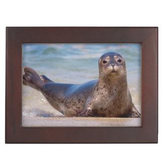 A seal on a beach along the Pacific Coast Keepsake Box