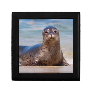 A seal on a beach along the Pacific Coast Small Square Gift Box
