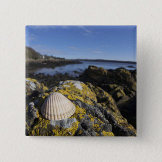 A Seashell Sits On A Rock | Dumfries, Scotland 15 Cm Square Badge