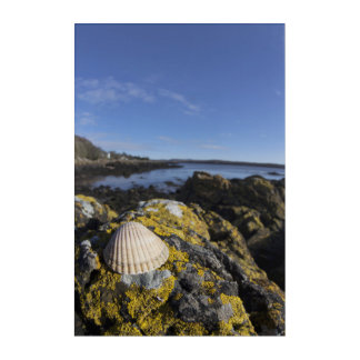 A Seashell Sits On A Rock | Dumfries, Scotland Acrylic Wall Art