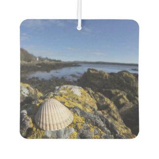 A Seashell Sits On A Rock | Dumfries, Scotland Car Air Freshener