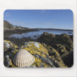 A Seashell Sits On A Rock   Dumfries, Scotland Mouse Mat