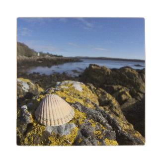A Seashell Sits On A Rock | Dumfries, Scotland Wood Coaster