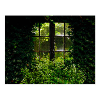 A secret garden window with climbing plants postcard