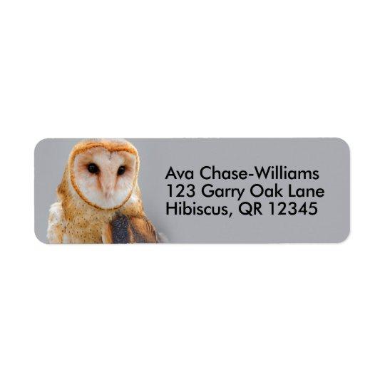 A Serene Barn Owl