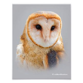 A Serene Barn Owl Photo Print