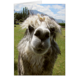 A Shaggy Alpaca Card
