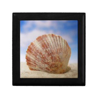 A Shell Propped In The Sand Small Square Gift Box