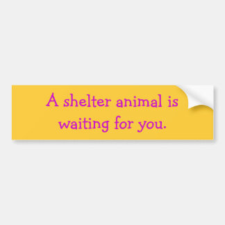 A shelter animal iswaiting for you. car bumper sticker