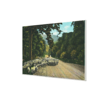 A Shepherd Leading Sheep on a Maine Highway Canvas Print