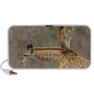 A side view of a Giraffe licking its young, Portable Speaker