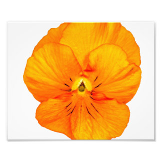 A Simple Orange Pansy Photo Print