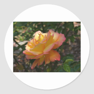 A single beautiful delicate rose round stickers