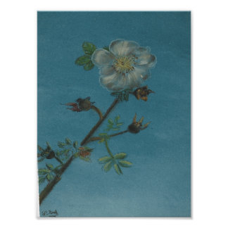 A Single Flower Poster