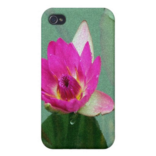 A single pink waterlily in a pond iPhone 4 cover