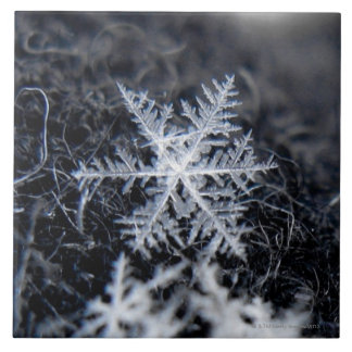 A single snowflake on stands out large square tile