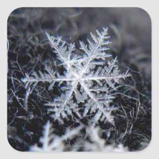 A single snowflake on stands out square sticker