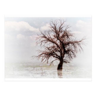 A SINGLE TREE IN A SWAMP WITH FOG POST CARDS