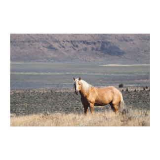 A single wild horse stands alone canvas print