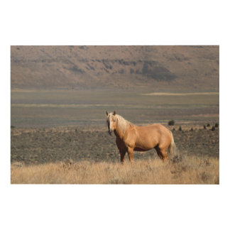 A single wild horse stands alone wood wall art