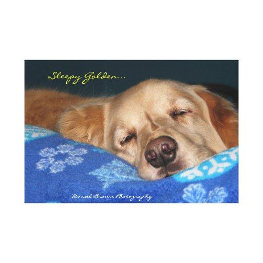 A Sleepy Golden Retriever Canvas Print