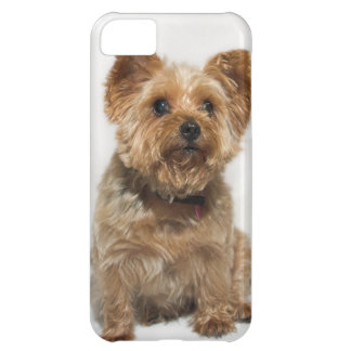A small Dog iPhone4 Case-Mate Barely There iPhone 5C Case