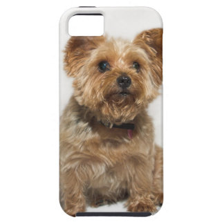 A small Dog iPhone 5 Case-Mate Tough iPhone 5 Covers