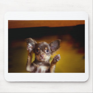 A small dog named Bosse Mousepad