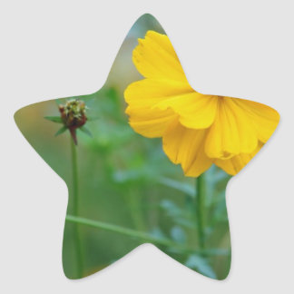 A small dragon fly sitting on a yellow flower sticker