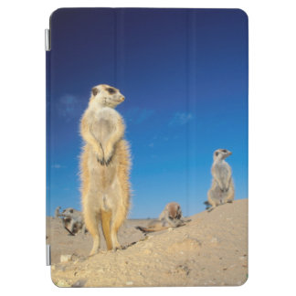 A small Suricate family interacting at their den iPad Air Cover