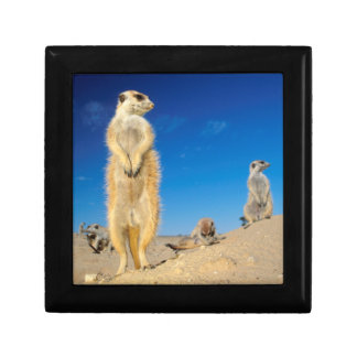 A small Suricate family interacting at their den Small Square Gift Box