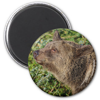 A Smiling Grizzly Bear Fridge Magnet