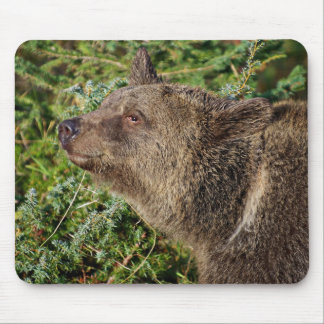 A Smiling Grizzly Bear Mousepad