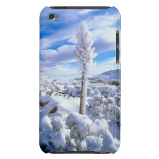 A snow covered yucca barely there iPod cases