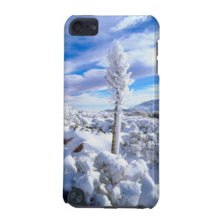A snow covered yucca iPod touch 5G case