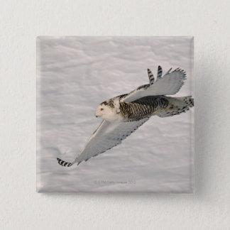 A Snowy owl gliding. 15 Cm Square Badge