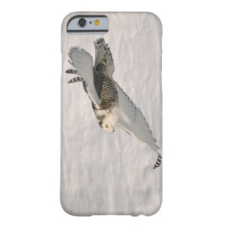 A Snowy owl gliding. Barely There iPhone 6 Case