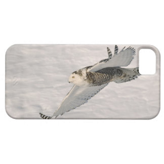 A Snowy owl gliding. iPhone 5 Covers