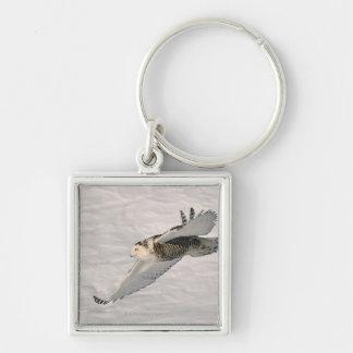 A Snowy owl gliding. Key Ring