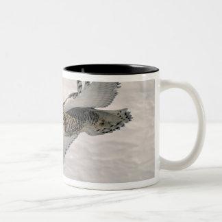 A Snowy owl gliding. Two-Tone Coffee Mug