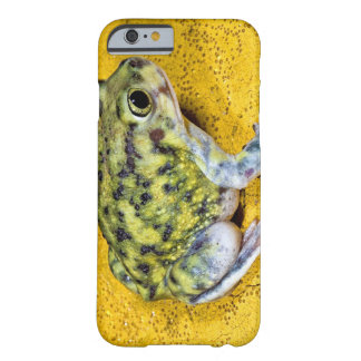 A spadefoot toad barely there iPhone 6 case